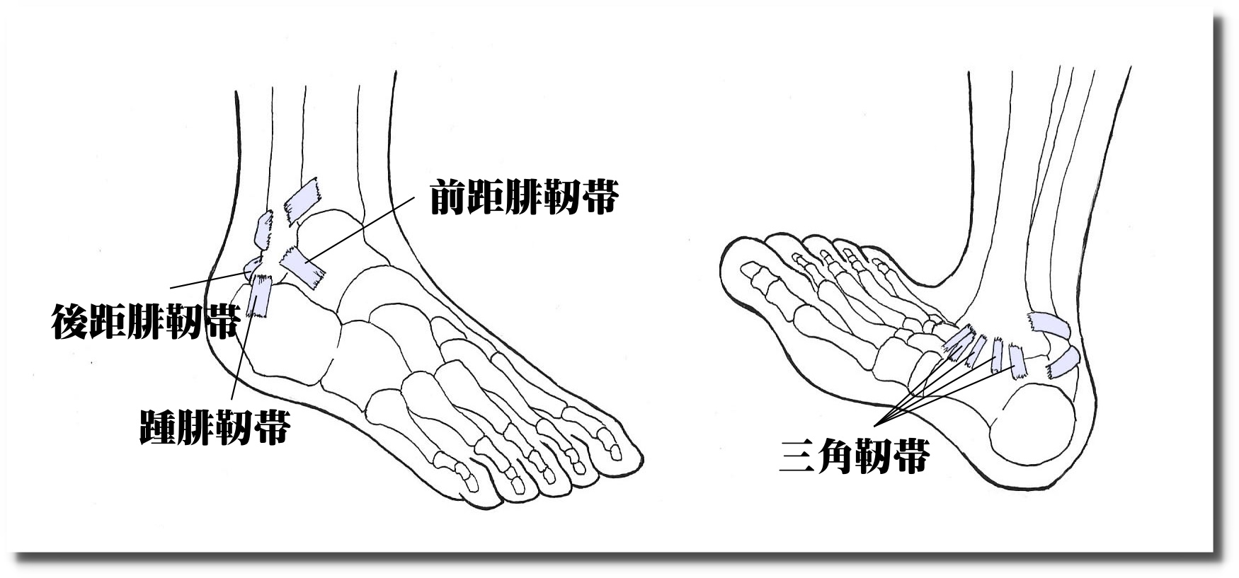 捻挫の鍼灸治療|せきぐち鍼灸整体院|武蔵小金井